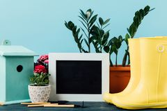 Close up view of plants in flowerpots, rubber boots, birdhouse, gardening equipment and empty blackboard on wooden tabletop on blu. E royalty free stock photography