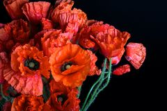 Poppy flowers, close up view Royalty Free Stock Image