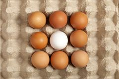 Close-up view of raw chicken eggs in a box, brown egg on green background. royalty free stock photography