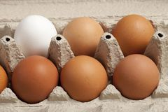 Close-up view of raw chicken eggs in box, egg white, egg brown on green background. stock images