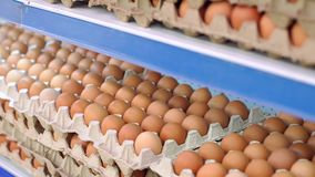 Close-up view of raw chicken eggs in egg boxes. Raw eggs for sale. Close-up of Eggshell at supermarket. Food concept. Brown eggs in cardboard container. Eggs stock video footage