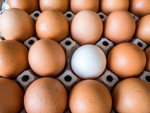 Close-up view of raw chicken. Every egg is a yellow egg, with the exception of white duck eggs. The duck eggs shows prominently surrounded by chicken eggs Royalty Free Stock Photo