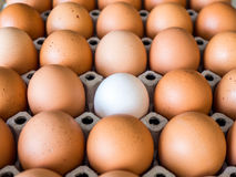 Close-up view of raw chicken. Every egg is a yellow egg, with the exception of white duck eggs. The duck eggs shows prominently surrounded by chicken eggs Royalty Free Stock Photos