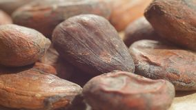 Close up view of raw cocoa beans as super food on the wooden table. Macro. View stock video