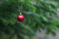 Close-up view of red ball as decoration hanging on the branches of a Christmas tree and sparkling in the sunshine. Christmas in royalty free stock photos