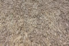 Close up view of reed thatch Royalty Free Stock Images