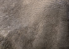 Close up view of Rhino skin Stock Images