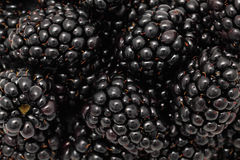 Close-up view on ripe blackberries Stock Image