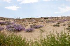 Sand dune vegetation. Close up view of sand dune vegetation on the Algarve region Royalty Free Stock Image