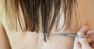 Close up view of scissors trimming and cutting a woman`s wet hair royalty free stock photo