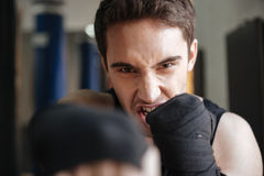 Close up  view of screaming boxer doing exercise in gym Stock Images