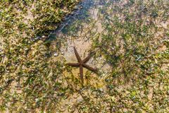 Close up view of sea star on sand. In water Royalty Free Stock Photography