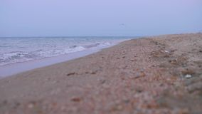 Close up view of sea water in morning with slow shift of focuse. From front to back stock video