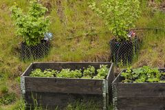 Close up view of small garden in plastic pots and pallet collars. Beautiful nature backgrounds. stock photo