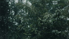 Close up view of snow falling in front of trees. Out of focus stock footage