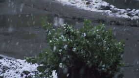 Close up view of snow falling in front of trees stock video footage