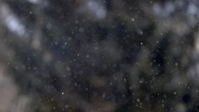 Close up view of snow falling in front of trees out of focus stock video