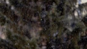 Close up view of snow falling in front of trees out of focus stock video footage