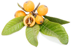 Close up view of some loquat fruits. Loquat fruits on a branch with leaves and seeds   on a white background Stock Photography