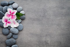 Close up view of spa theme objects on grey background. Royalty Free Stock Image