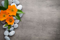 Close up view of spa theme objects on grey background. Royalty Free Stock Images