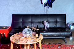 close up view of sphynx cat sitting on sofa in party room wit balloons and champagne