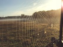 Close up view of a spiders web of against sunrise in the field with fog stock photo