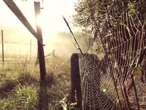 Close up view of a spiders web of against sunrise in the field with fog stock photography