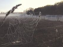 Close up view of a spiders web of against sunrise in the field with fog royalty free stock images