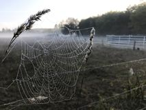 Close up view of a spiders web of against sunrise in the field with fog royalty free stock photos