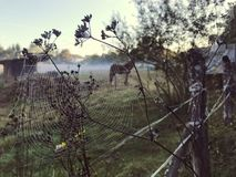 Close up view of a spiders web of against sunrise in the field with fog royalty free stock photo