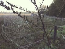 Close up view of a spiders web of against sunrise in the field with fog stock images