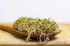 A spoon fill with mixture of various germ sprouts on a wooden surface stock photos