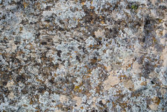 A close-up view of a stone. A stone background textured with moss Stock Image
