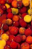 Strawberry Tree (Arbutus Unedo) fruit. Close up view of strawberry tree (Arbutus Unedo) fruits Royalty Free Stock Image