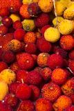 Strawberry Tree (Arbutus Unedo) fruit. Close up view of strawberry tree (Arbutus Unedo) fruits Stock Image