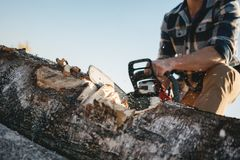Close up view on strong lumberjack wearing plaid shirt and hat use chainsaw in sawmill. Sawdust fly apart stock photo
