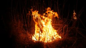 Close up view of a terrible dangerous wild fire at night in a field. Burning dry straw grass. A large area of nature in
