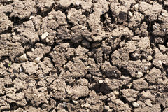 Close up view of textured fertile dry soil in garden Royalty Free Stock Image