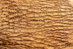 Intricate pattern of the bark of a ripe coconut before removing the husk. Close up view of the textured intricate pattern of the bark of a ripe coconut before stock image