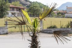 Close-up view to little palm tree. Near the road to Meteora, Greece stock photo