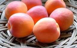 Close-up view to a still-life of ripe sweet apricots on a wicker dish in a sunny summer day. royalty free stock photo