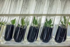 Close up view to tubes with microplants in nutrient medium with activated carbon adding Stock Images