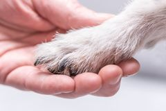 Close up view top of dog paws and human hand stock image