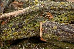 Close-up view at tree bark Stock Images