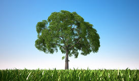 Close up view of an  tree in a grass field. Close up of a tree in a grass field, centered in the scene, viewed from a low point of view, with close grass Stock Photos