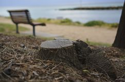 Tree stump with blurred empty bench royalty free stock image