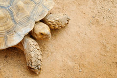 Close up view of turtle. On sandy surface Stock Photo