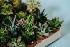 Close-up view of various beautiful green succulents. On grey Stock Photography
