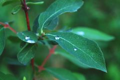 Close up view of water drops on green leaf stock images